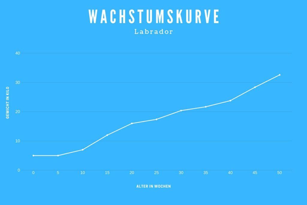 Wachstumskurve Labrador - Wie groß ist ein Labrador im Wochenverlauf?