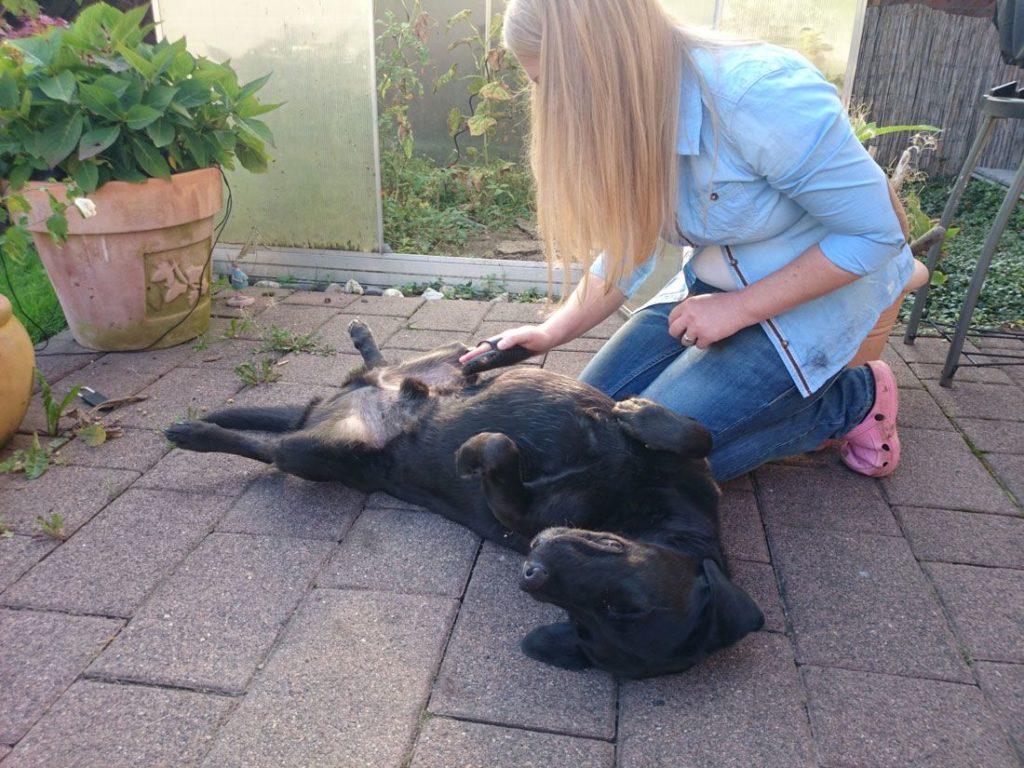 Aufstellung der monatlichen Kosten für einen Labrador