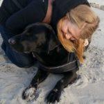 Wann werden Labradore ruhiger