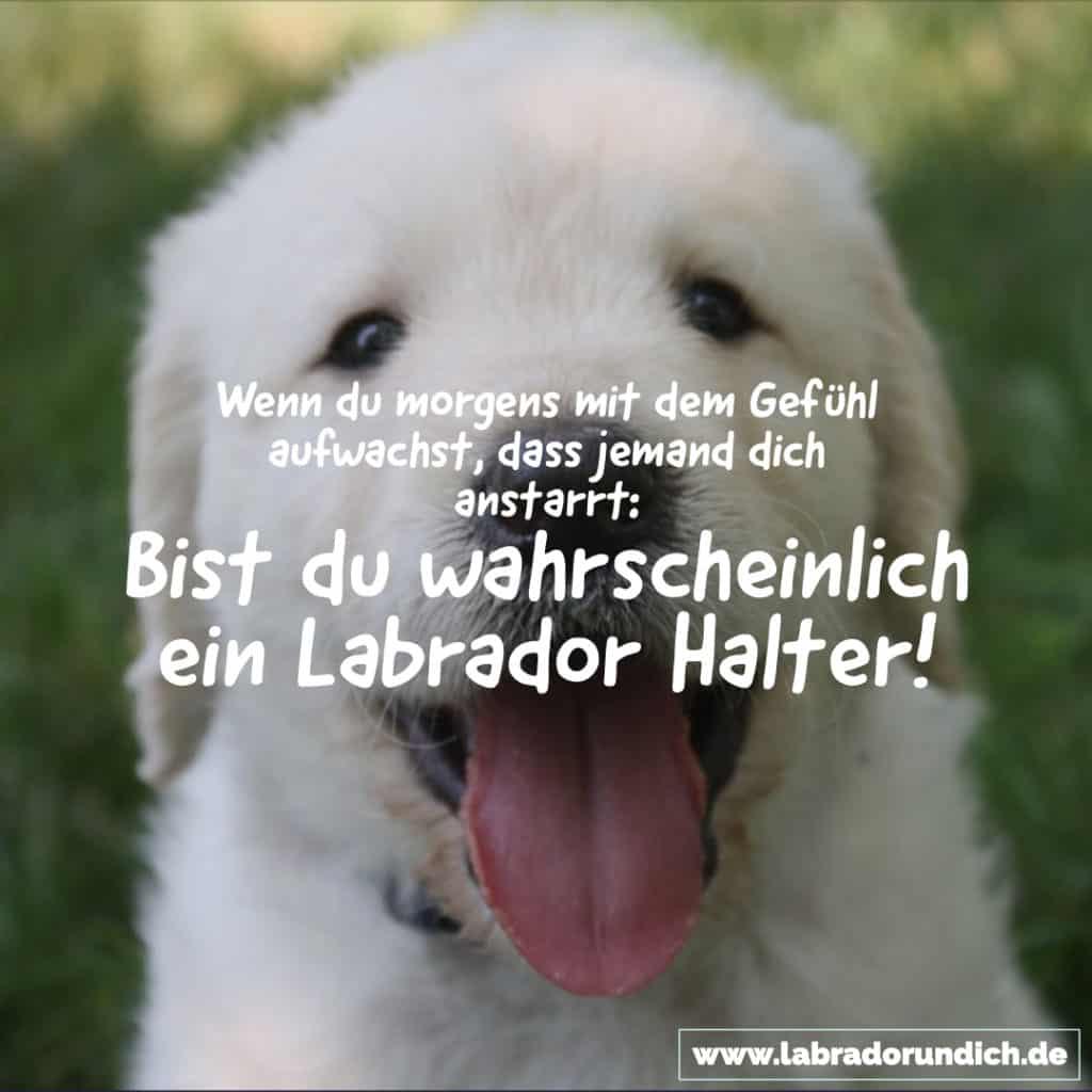 Labrador Zitat für Labbi Halter