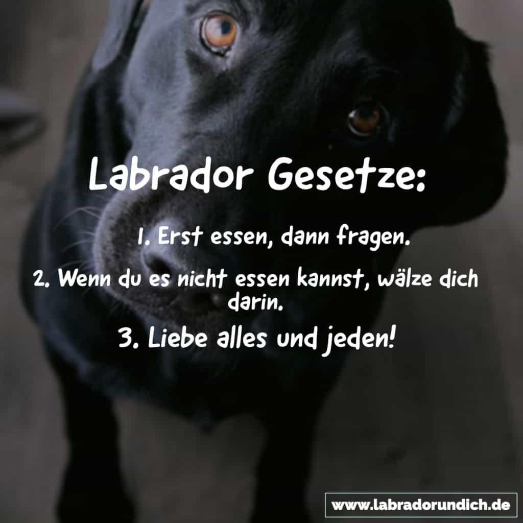 Labrador Spruch zu den Gesetzen der Labbis.