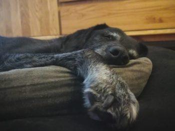 Welches Hundebett ist das beste für einen Labrador